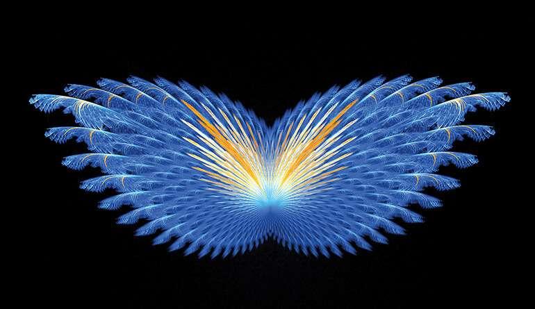 offre-papillon