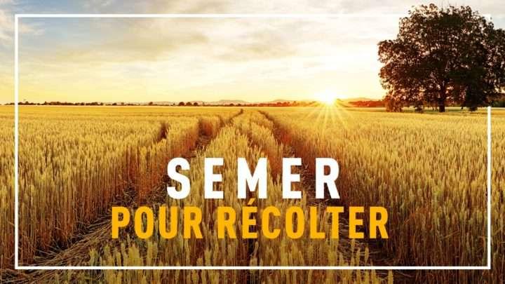 semer-pour-recolter-3